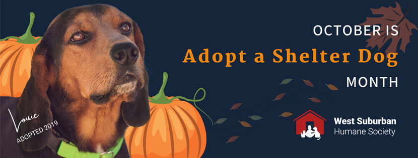 October Dog Adoption Special