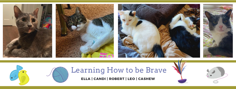 Shy Cats - Learning How To Be Brave