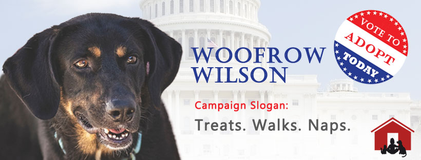 Woofrow Wilson - A Very Special Dog